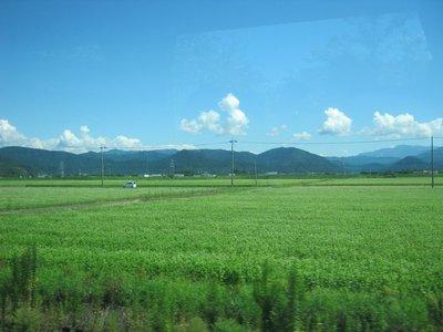 Japan_Month_1_495.jpg