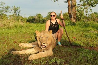 Løver: Det var tid til mange løvebesøk også under det åtte veker lange opphaldet i Zimbabwe.