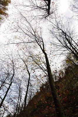 fallling_leaves.jpg