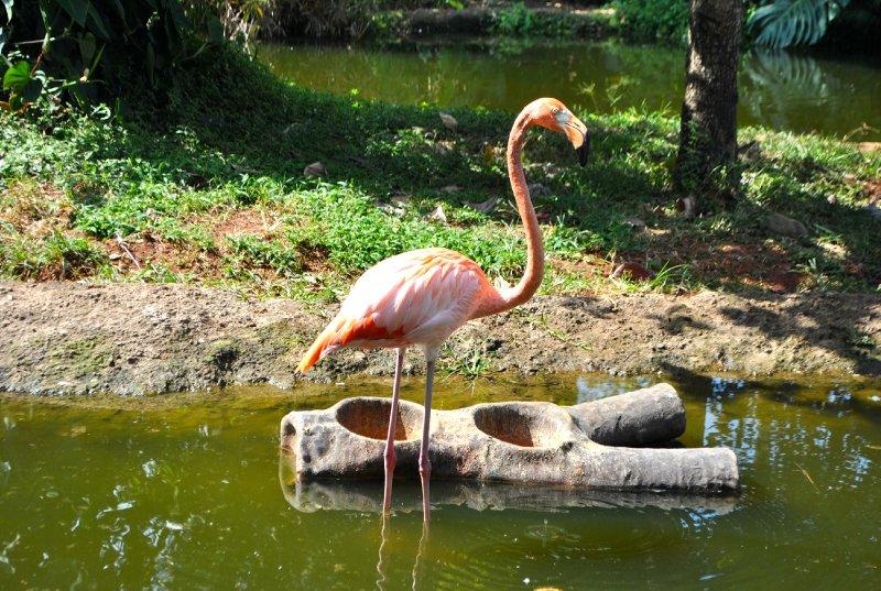 large_Flamingo.jpg