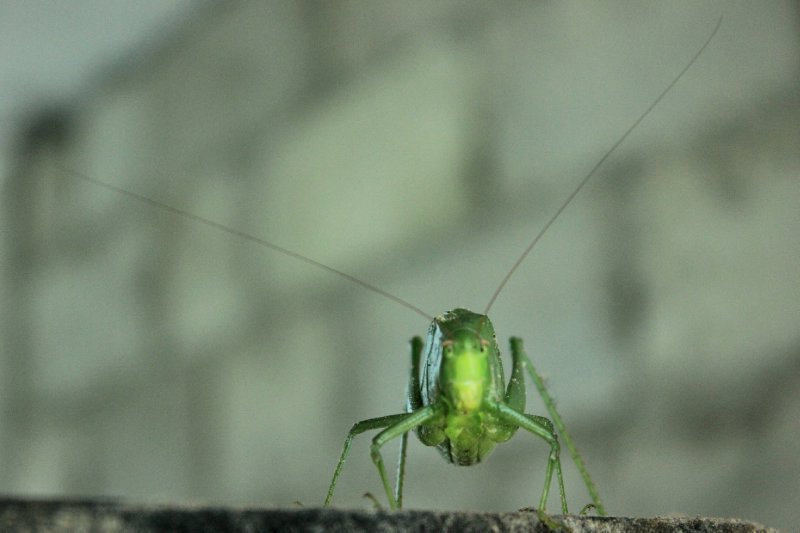large_Insect.jpg