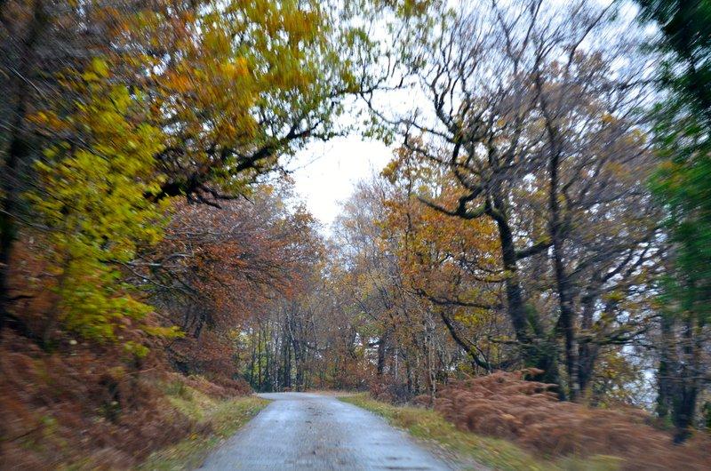 large_autumnal_auburn.jpg