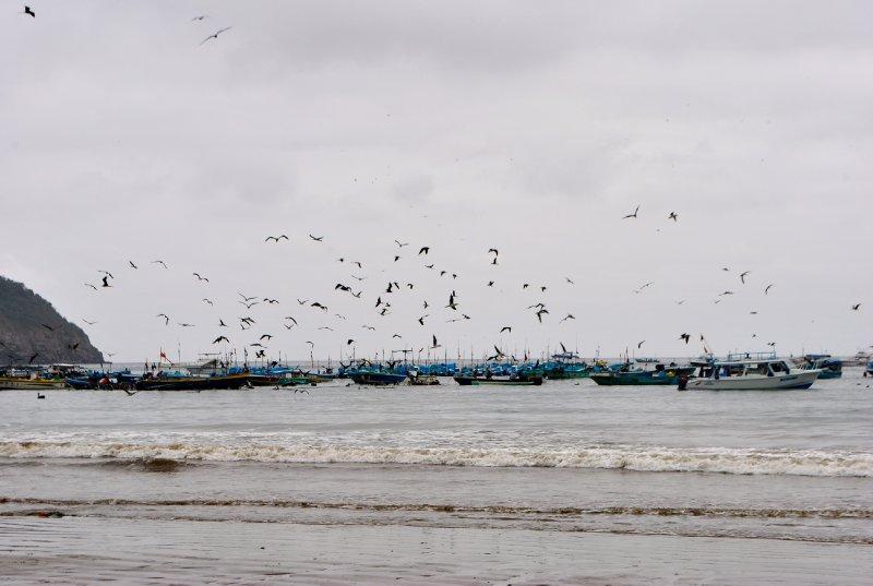 large_birds.jpg