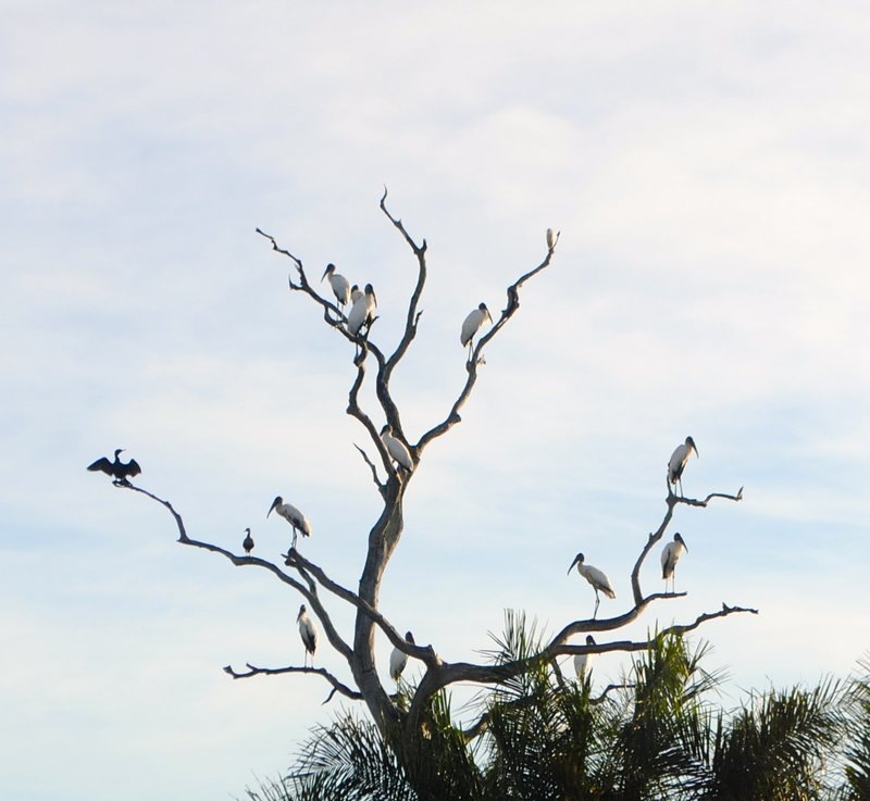 large_birds_in_tree.jpg