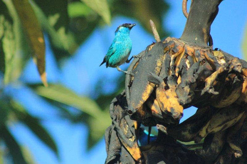 large_bluebird.jpg