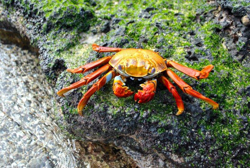 large_crabby.jpg