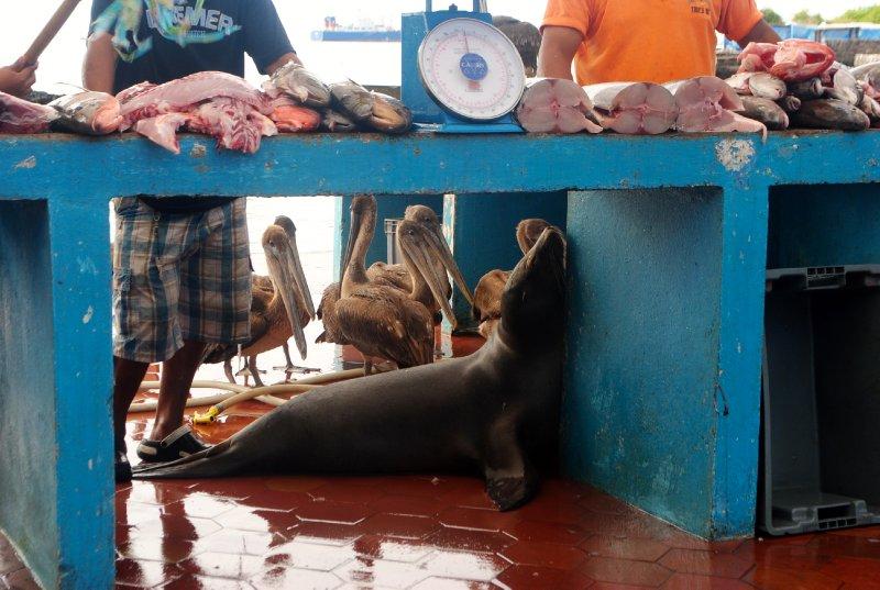 large_fish_market.jpg