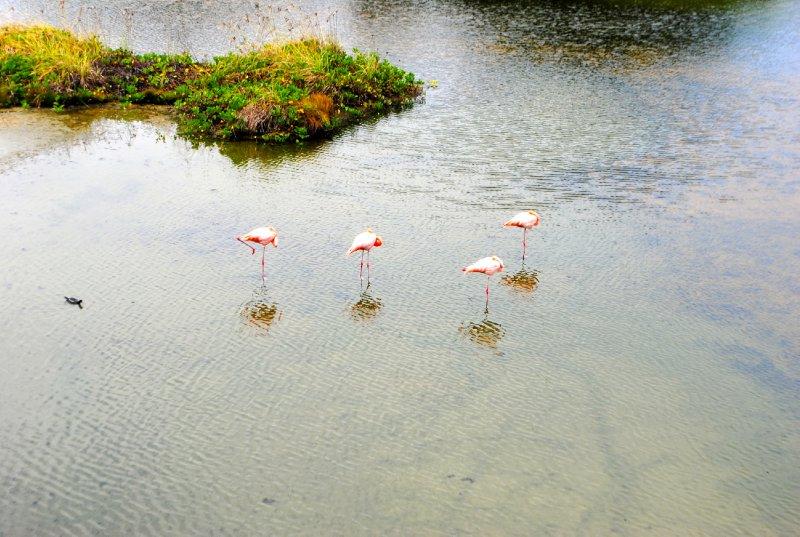 large_flamingos.jpg