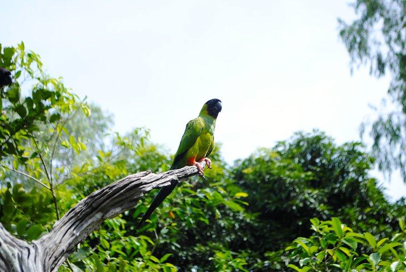 large_parrot.jpg