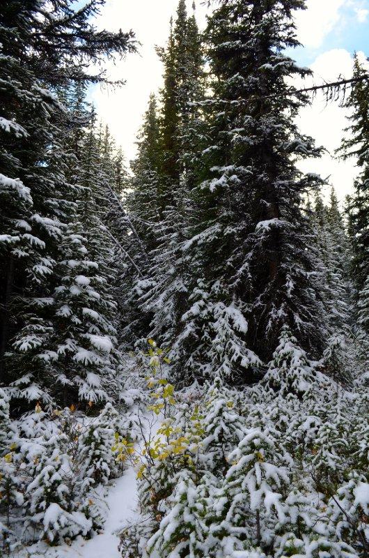 large_snowy_tree.jpg