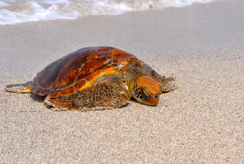 large_turtle_on_beach.jpg