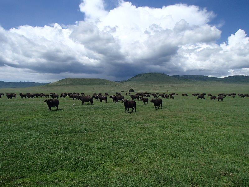 Ngorongoro Crater (i krateret)