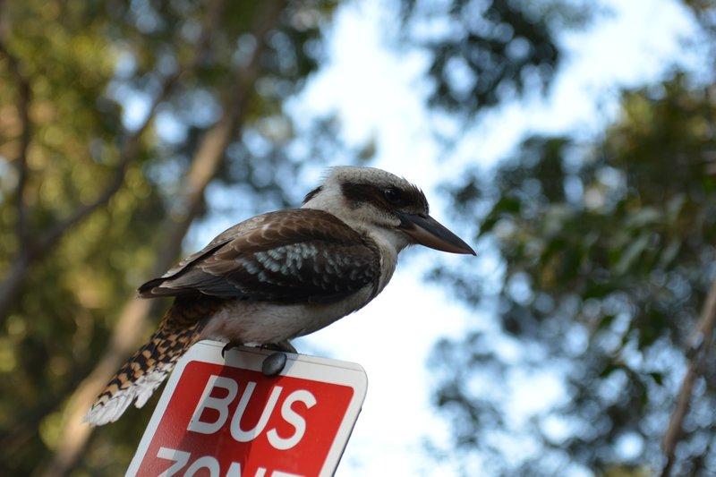 Petit oiseau du coin
