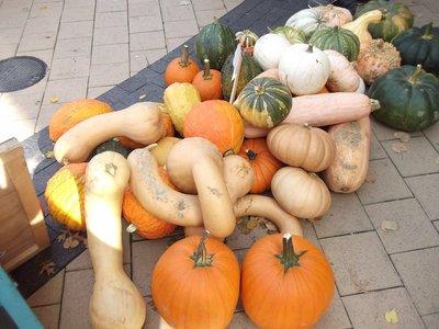 Farmers' Market Squash Selection
