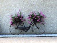 Bicyclette.._fleurs.jpg