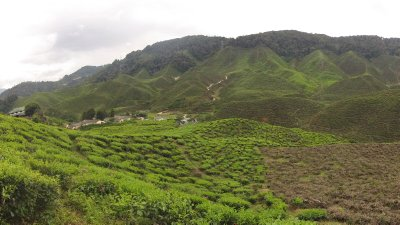 01_Cameron_Highlands__5_.jpg