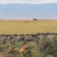 Ngorongoro