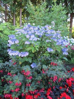 BG Flowers 8-001