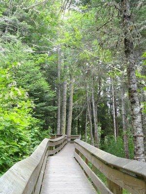 Boardwalk through the Forest
