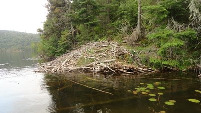 Abandonded Beaver Dam