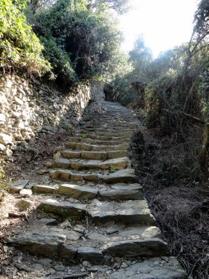 Along_the_path_9.jpg