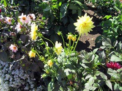 BG Flowers 2