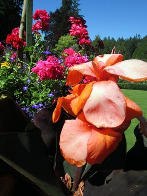BG Flowers 7