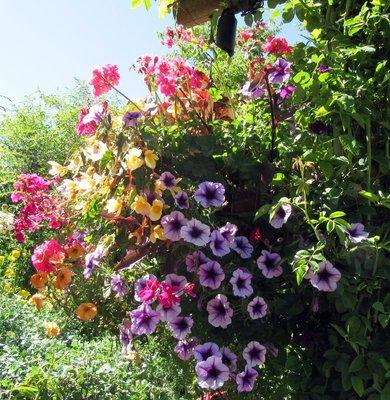 BG Flowers 8
