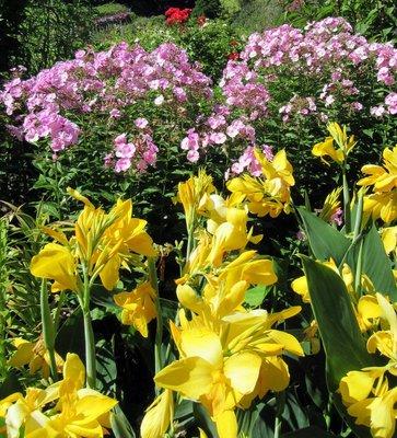 BG Flowers 9