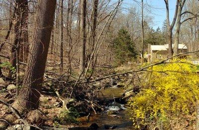 Birchrun Creek
