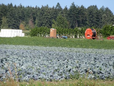 Cabbage Patch on Saanich Peninsula