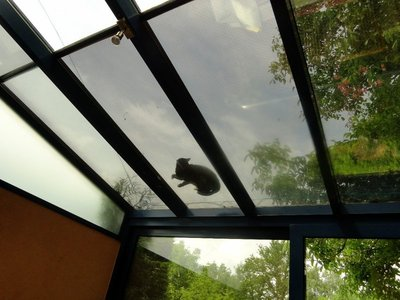 Cat on a Warm Glass Roof