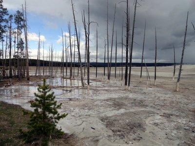 Expanding Hot Water Kills Trees