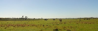 Flat Cattle Country