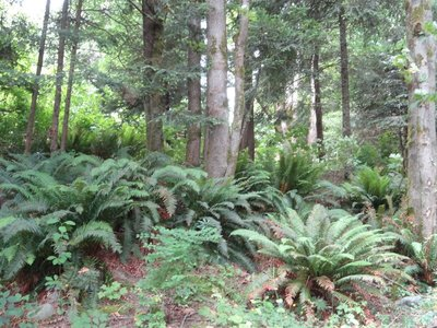 Floor of the Rain Forest