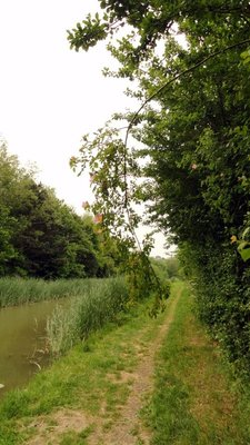 Follow the Towpath