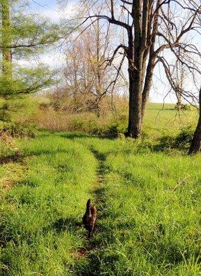 Hera Leads the Morning Walk