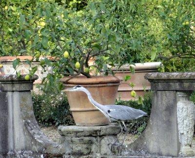 Heron and lime tree