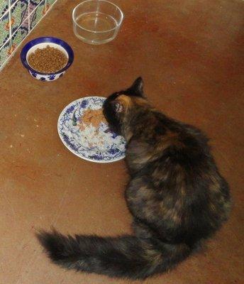 Hyacinth Enjoys Dinner
