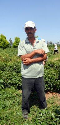 In the Tea Plantation