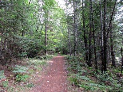 It's A Mountain Bike Trail