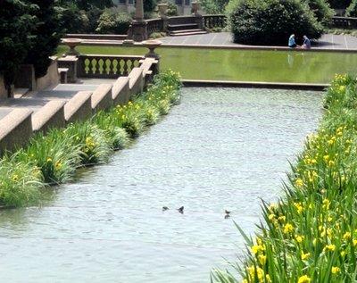 Little Birds Bathing