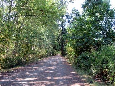 Lochside Bike Path  through the Shade