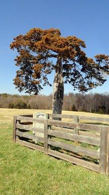 Lone Grave in Appomattox