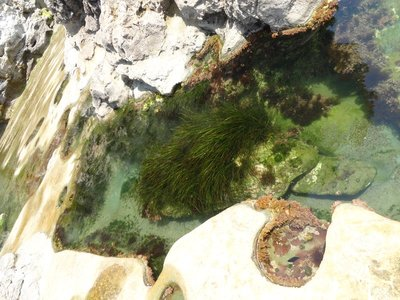 Looking into a Tide Pool