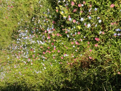 More Wildflowers 5-24-2013 9-32-33 PM