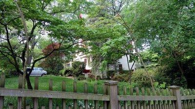 My Home in Takoma Park