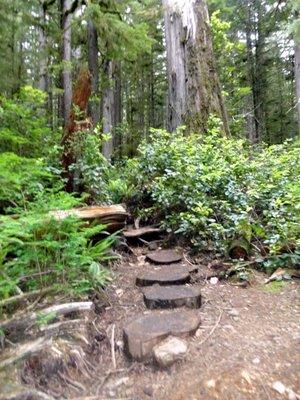 Path to the Avatar Grove 1
