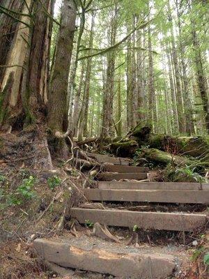 Path to the Avatar Grove 2