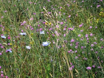 Summer Wild Flowers Everywhere